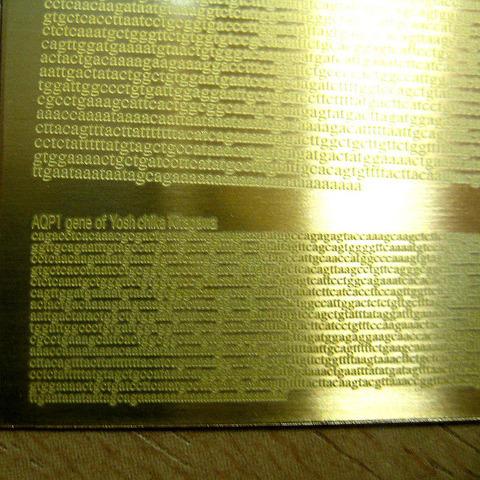 真鍮プレート1の画像